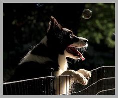 The 7 Best Wireless Dog Fence - Pet Life World Wireless Dog Fence, Pet Life, Your Pet, Husky, World, Pets, Outdoor, Animals, Outdoors