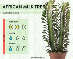 9 of the most low light tolerant indoor plants that exist! These plants actually thrive in the shade and will adapt to any amount of sunlight provided. Indoor Plant Lights, Plant Lighting, Best Indoor Plants, House Plants Decor, Plant Decor, African Milk Tree, Milk Plant, Low Light Plants, Tree Care