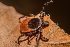 Why the Variety of Tick Hosts in Your Back Yard Might Be a Good Thing