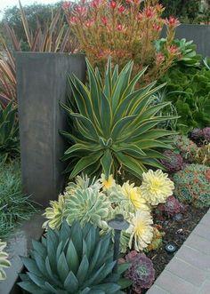 Beautiful drought tolerant garden