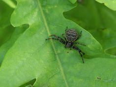 http://faaxaal.forumgratuit.ca/t3364-global-photos-d-araignee-de-france-araignees-francaises-non-identifie-french-spider#7441  Photo d'araignée gratuite et libre de droits Photo d'araignée dans le Domaine Public