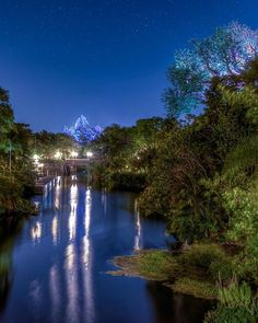And we wrap up today with #TreeOfLifeThursday with a photobomb by Expedition Everest.
