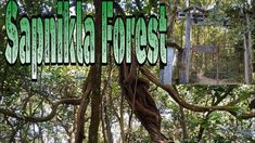 Sapnikla forest is in Chopra block in the district of Uttar Dinajpur, West Bengal. It is a very good picnic spot. Peaceful environment attracts the nature lo. Picnic Spot, West Bengal, Nature, Travel, Naturaleza, Viajes, Trips, Off Grid, Natural