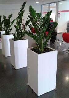 Jardinières IMAGE'IN: INDOOR - Les bacs IMAGE'IN s'installent à l'intérieur !