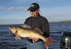 Besides putting you on the biggest walleyes, this open-water tactic gets you away from crowds that often gather in the classic areas of last current walleyes. Bass Fishing Shirts, Fishing Uk, Fishing Shop, Sport Fishing, Walleye Fishing Lures, Fishing Rigs, Fishing Videos, Fishing Adventure, Fishing Techniques