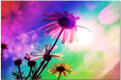 Rainbow Daisies | original art | by Donna Lee Canvas Art from £95