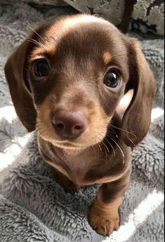 Super Cute Puppies, Cute Baby Dogs, Cute Little Puppies, Super Cute Animals, Cute Dogs And Puppies, Cute Little Animals, Cute Funny Animals, Doggies, Cute Dogs And Cats