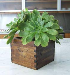 Little indoor plant