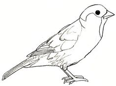 Sparrow Drawing, step 5