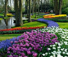 Timing is everything when it comes to visiting Keukenhof. The park springs to life for only eight weekends annually, between mid-March and mid-May, when more than 7 million cheery tulips, daffodils, and hyacinths bloom. As you wander among these flowers, look out for more than 100 works of art and four pavilions dedicated to more exotic species.