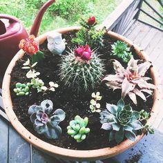 Planting a Succulent Pot