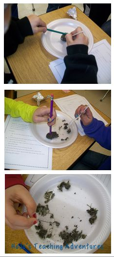 Dissecting Owl Pellets {with FREE worksheet}  (You learn about owl pellets in the book, Poppy.  Fun to do this after it's read aloud.)