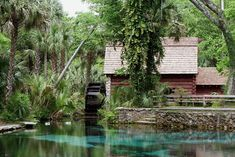 - The 5 Best Swimming Holes In Florida Will Make Your Summer Epic Old Florida, Florida Trail, Places In Florida, Visit Florida, Florida Vacation, Vacation Places, Vacation Trips, Vacation Spots, Vacations