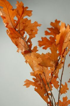 """Preserved Fall Leaves Orange 24"""" Branches (4-6 branches)"""