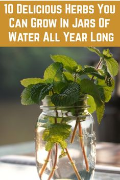 10 Delicious Herbs You Can Grow Indoors In Jars Of Water All you need is a jar, some water and a herb cutting and you can grow an unlimited supply of fresh herbs indoors all year round.
