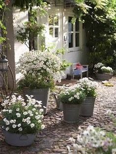 Petits plaisirs au quotidien- use of same white flower in all containers