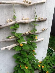 Small Space Gardening, Small Gardens, Outdoor Gardens, Garden Deco, Garden Art, Greenhouse Gardening, Gardening Tips, Alpine Garden, Garden Trellis