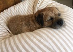 """""""See I have been an angel while you were gone,....This time!"""" Freddy 