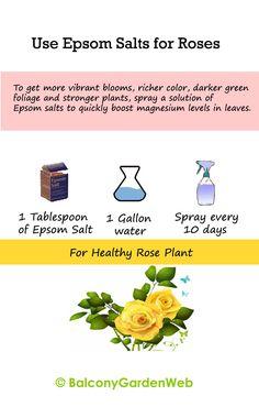 epsom salf for roses_mini