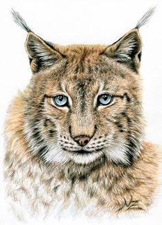 Der Luchs - Wildkatze Bild Kunstdruck Luchs von Arts & Dogs by Nicole Zeug auf DaWanda.com