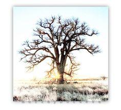 Tree Art Photograph Winter Nature 10x10 by MurrayBolesta on Etsy, $65.00