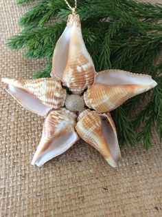 Juvenile fighting conchs and a button shell are used to make this sea star ornament. Another of my original designs handcrafted from my personal collection of treasures gathered on the beaches of South Florida. I have added a sprinkle of adhesive and angel dust for a glistening effect. Enjoy the beauty of nature on your Christmas tree or in your window as a sun catcher year round as a reminder of the sea. Measures app. 2 1/2 - 31/2 in-diameter Sea Shell Star Ornament/ Beach Knob…