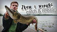 Catch&Release - złów i wypuść to idea, którą popieramy całym sercem! #wędkarstwo #catchandrelease #C&R #złówiwypuść #filmywędkarskie https://www.youtube.com/user/CoronaFishing/videos