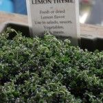 Creeping thyme is a spreading thyme variety. It is excellent planted as a lawn substitute or amongst stepping stones or pavers. Learn more about creeping thyme plant care and more in this article.