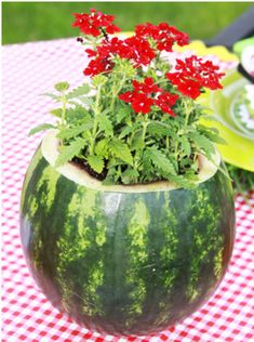 "Watermelon Flower Pot - when you've scooped the watermelon out to eat, use the ""bowl"" of the rind for a pretty floral arrangement for the table! Watermelon Centerpiece, Watermelon Flower, Watermelon Decor, Picnic Decorations, Deco Champetre, Picnic Theme, Summer Picnic, Summer Bbq, Summer Parties"