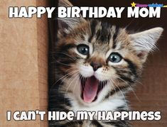 Every day is Caturday! - LOLcats is the best place to find and submit funny cat memes and other silly cat materials to share with the world. We find the funny cats that make you LOL so that you don't have to. Cute Kittens, Cats And Kittens, Kitty Cats, Smiling Animals, Funny Animals, Cute Animals, Animals And Pets, Funny Saturday Memes, Cat Birthday Memes