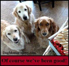 Kiva, Claire & Sandy from Dog Mom's Bakery