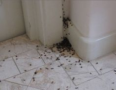 How to Get Rid of Ants in the House!Make Your Life Healthier House Bugs, Ants In House, Get Rid Of Ants, Organic Compost, Mosquitos, House Made, Home Hacks, How To Get Rid, Home Remedies