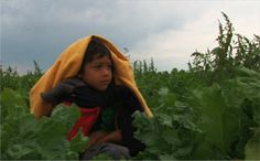 TAKE ACTION: End Child Labor in US Agriculture   Human Rights Watch hrw.org