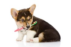 3 reasons why it's important to brush up on your pet's dental health this spring from Petplan pet insurance