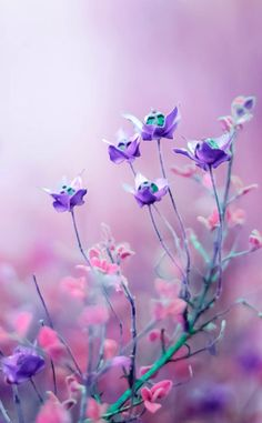 Haben diese Blumen nicht etwas magisches? Und nicht nur wegen der Farbe...