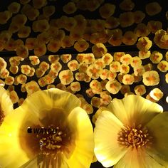 Selfriges 11-10-2015 LONDON by ANNA CORTADA