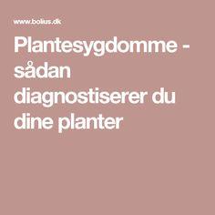 Plantesygdomme - sådan diagnostiserer du dine planter