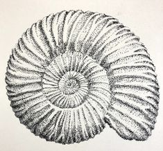 Art prompt: spiral. A fossilised ammonite in pen and ink. Art Prompts, Ammonite, Don't Give Up, Pencil Drawings, Spiral, Ink, Abstract, Summary, India Ink