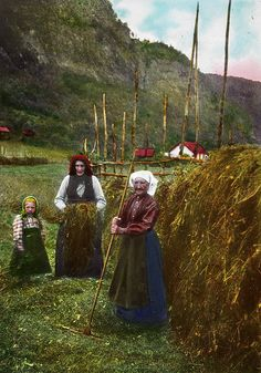 Norwegian Haymakers,1915 --- Women in Norway cleared the tall grass and chopped it down w/wooden 2-3 foot knives --- they hung the wet hay over a home made fence. Making Hay. Anyone able bodied, would participate. It's what peoples animals ate in winter, and used for warmth in some cases.