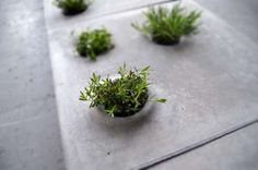 allowing for flexible customization and integration of greenery on paved urban surfaces, the perforated vegetation stones can host plant life and green space. Concrete Plant Pots, Concrete Pavers, Concrete Blocks, Go Green, Green And Grey, Pot Plante, Paving Stones, Gardening, Green Plants