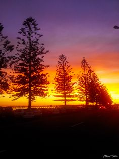 travelthisworld:  Sunset Trees (Australia) by Me submitted by: the fabulous etherealvistas, who you should all follow immediately ♥