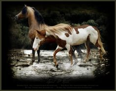 Spirit and Rain by VagabondQAD.deviantart.com on @deviantART