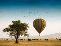 Overall Rating: 99.745 View the complete listing of the World's Best Hotels and Resorts. - Courtesy Singita Grumeti