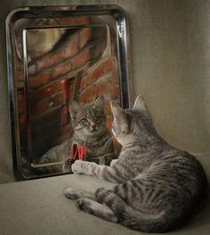 鏡よ鏡 Espejito, espejito, quién es el mas bonito ?