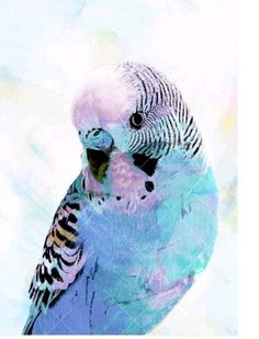 Sky Blue Budgie Canvas Wall Art - Colour Therapy - T&W Blended Events 2015 Watercolor Bird, Watercolor Paintings, Watercolor Animals, Watercolours, Blue Budgie, 5d Diamond Painting, Budgies, Bird Art, Diy Painting