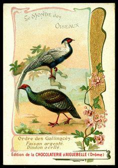 French Tradecard - Pheasants by cigcardpix, via Flickr