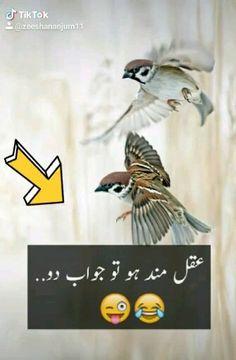 Aqalmand ho tu jawab do – Humor Urdu Funny Poetry, Urdu Funny Quotes, Best Urdu Poetry Images, Cute Funny Quotes, Love Poetry Urdu, Jumma Mubarak Images Download, Love Status Whatsapp, Instagram Status, Dont Touch My Phone Wallpapers