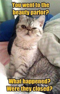18 Funny Cat Memes
