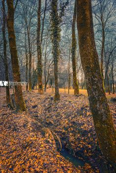 Fallen leaves by Giordano Aita on 500px