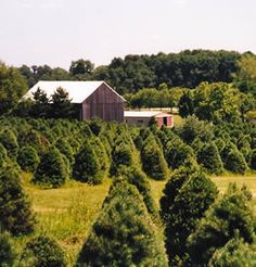 """Local Fall Treasures of Fairfield County, OH    Fairfield County farms offer a wide variety of """"agritourism"""" attractions for all ages. Select from a wide variety of attractions that offer a unique farm experience."""
